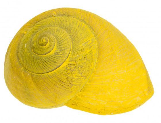 Lamarkiana Schnecke gelb 7cm – Bild