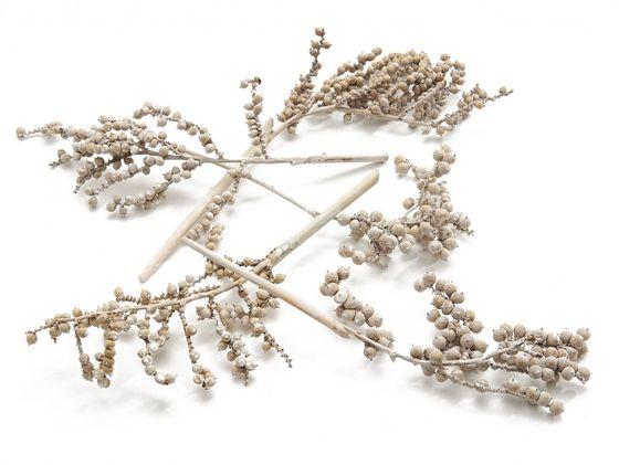 Canella medium weiss 25 Zweige ca. 20-25cm – Bild