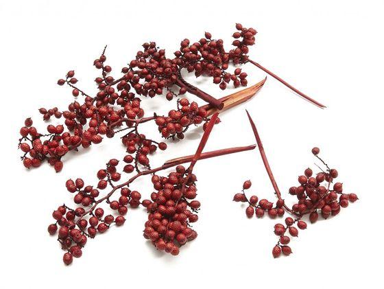 Canella Zweige medium rot 25 Zweige ca. 20-25cm – Bild