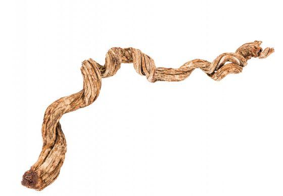 Cipo Rosca Liane ca. 200x12-15cm – Bild