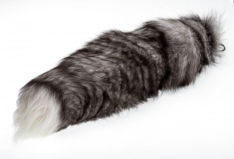 Bluefrostfuchsschweif ab 40cm  | Fuchsschweif