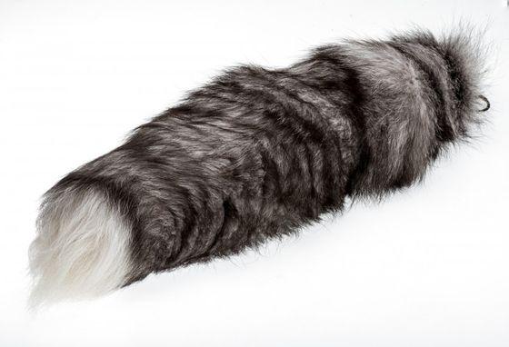 Bluefrostfuchsschweif ab 40cm  | Fuchsschweif – Bild