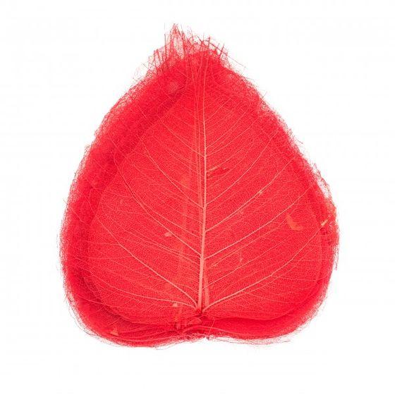 Skelettblätter rot 30 Stk. – Bild
