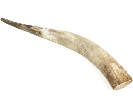 Rinderhorn natur 80-89cm – Bild