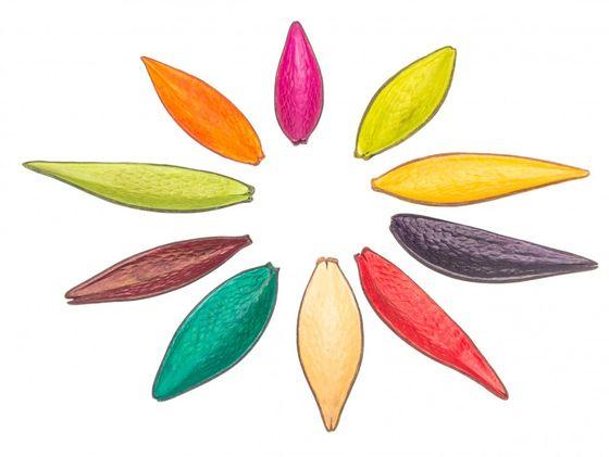 Canoinha mix 10 Farben 120 Stück – Bild 1