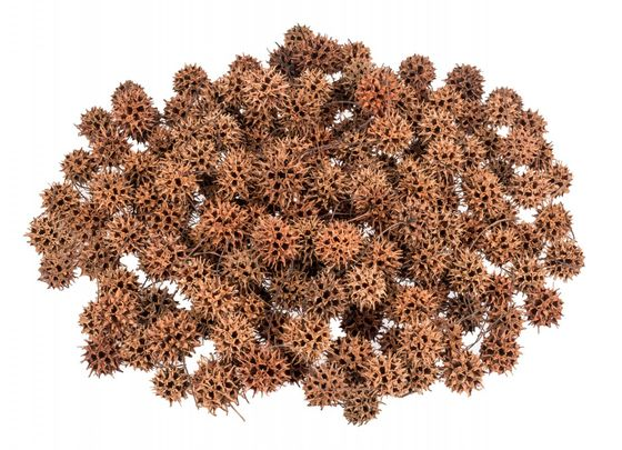 Amberbaum Zapfen 500g | Liquidambar styraciflu – Bild 1