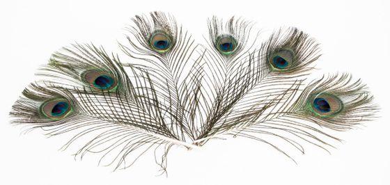 Pfauenfeder natur 1 Stück ca. 25-30cm – Bild 2