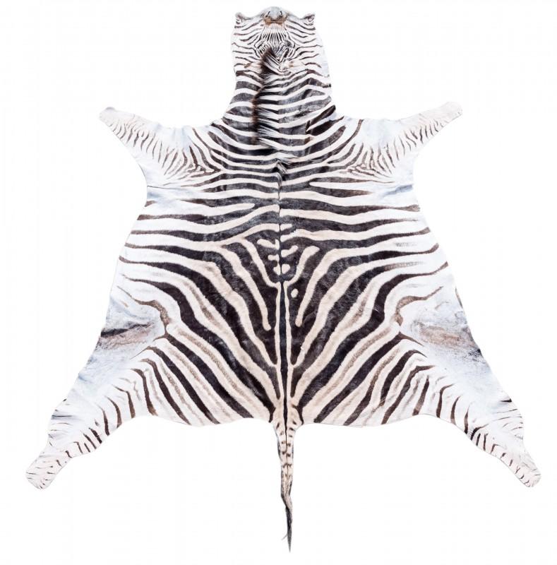 Zebrafell | Steppenzebrafell