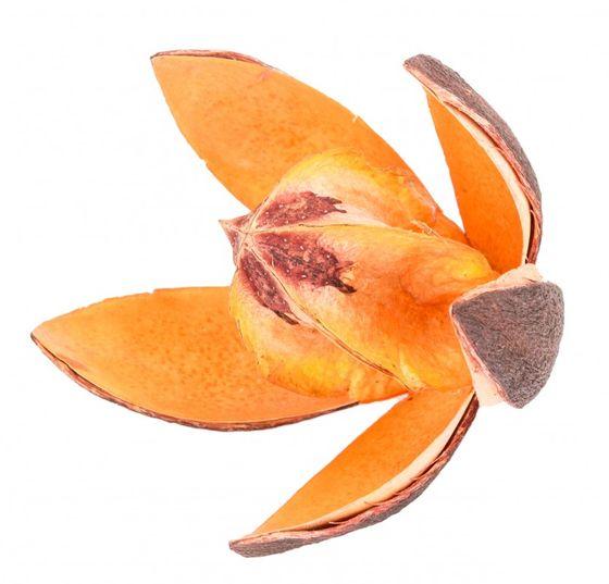Wildlilie orange ca. 6cm | Soymida febrifuga – Bild 1