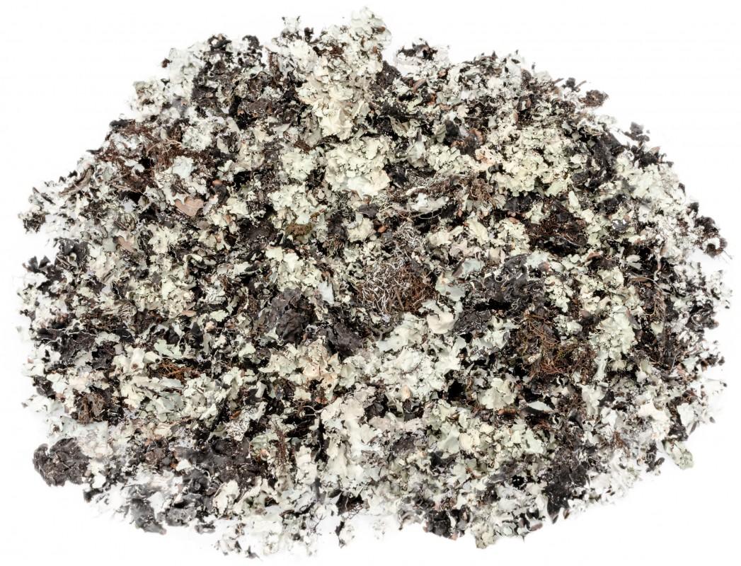 Schwarzes Moos Natur 250g | Black moss