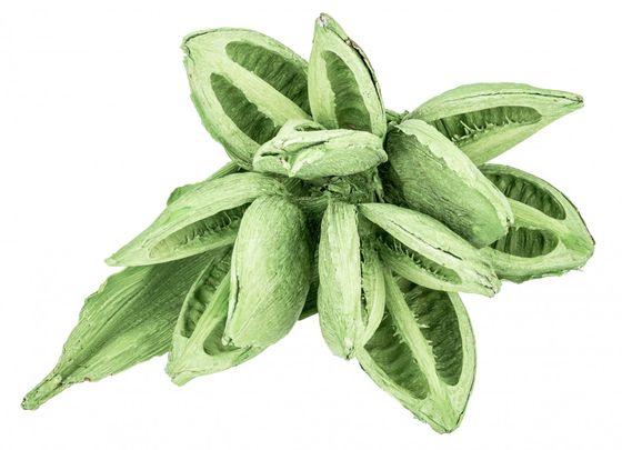 Sororoca Knospe apfelgrün ca. 20-30cm | Sororoca Pflanze – Bild 1