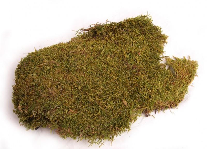 Moos Platten natur 50g | Lappenmoos
