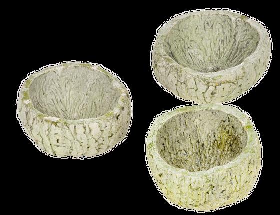 Qurico stone washed apfelgrün ca.7-10cm | Paranussschale – Bild 4