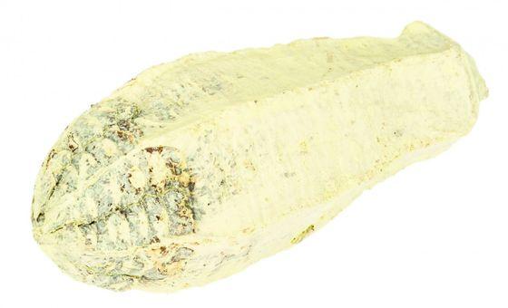 Mahagoni Kern apfelgrün ca. 8-12cm – Bild 1