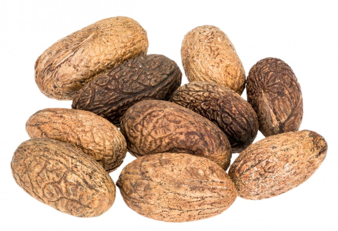 Uxi Nuss Samen 10 Stück ca. 3-5cm