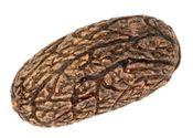 Uxi Nuss Samen 10 Stück ca. 3-5cm – Bild 3