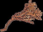 Manzanita Baum natur ca. 90cm hoch  – Bild 2