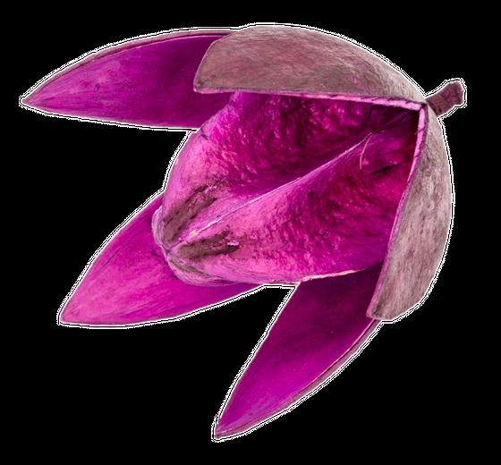 Wildlilie aubergine ca. 6cm | Soymida febrifuga – Bild 1