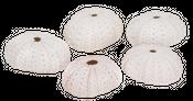 Seeigel Gehäuse weiß 5 Stück ca. 4cm – Bild 1