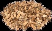 Douglasien Zapfen ca. 5-8cm 1kg | Pseudotsuga menziesii