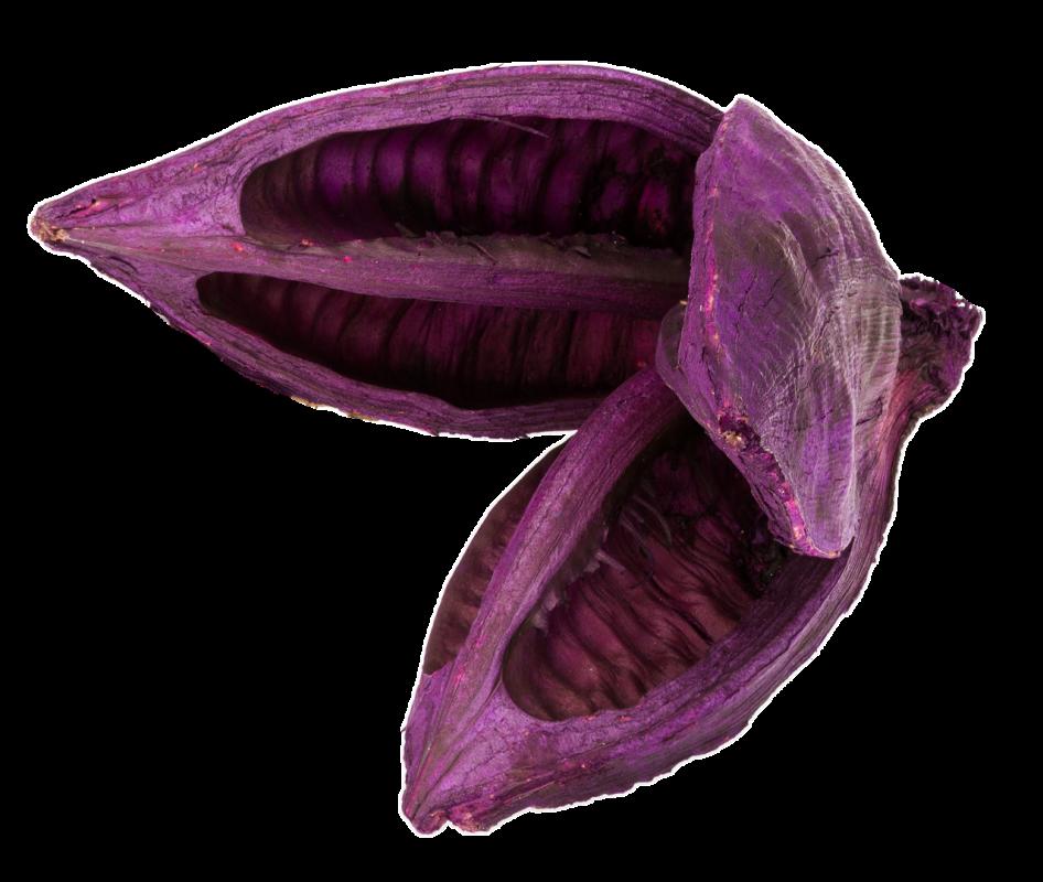 Sororoca Frucht brombeer ca.10-15cm