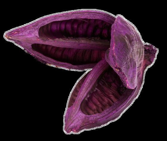 Sororoca Frucht brombeer ca.10-15cm – Bild 1