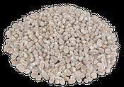 Kasuarinen Zapfen weiß 1kg | Casuarina – Bild 1