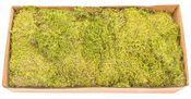 Moos Platten natur 0,5kg | Lappenmoos  – Bild 1