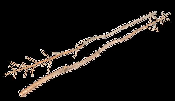 Fenchel Zweige ca. 160-180cm 5 Stück | Foeniculum vulgare – Bild 2