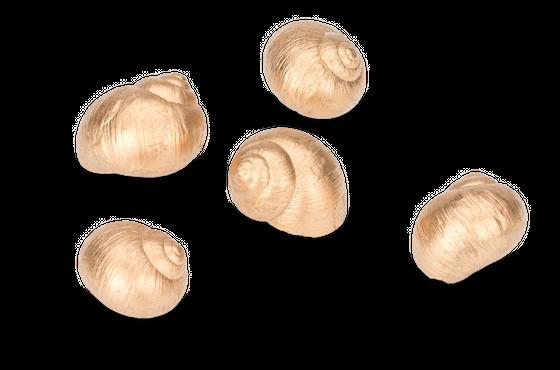 Weinbergschnecken gold 250g – Bild 2