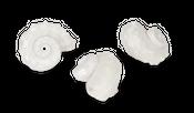 Angaria delphinus poliert ca. 3-5cm – Bild 2