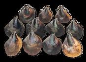 Steckmuscheln 1kg ca. 14-18cm | Black Modiola – Bild 1