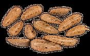 Pinus Maritima geschlossen und halbiert 12 Stück 8-10cm – Bild 1