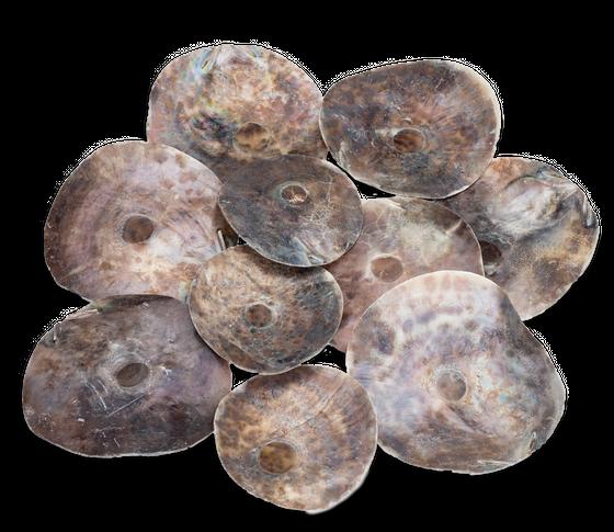 Placuna Placenta Runde Scheiben 250g – Bild 1