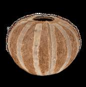 Deko Kokosnuss mit Streifen ca. 8-10cm – Bild 1