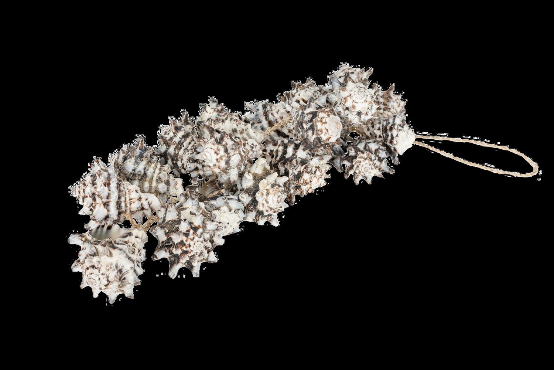 Dekohänger Vasum cornigerum ca. 25cm | Deko Hänger