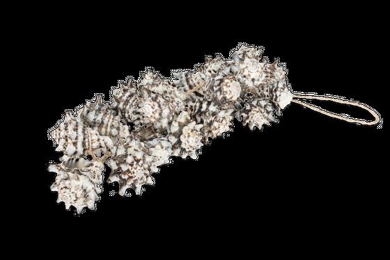 Dekohänger Vasum cornigerum ca. 25cm | Deko Hänger – Bild 1