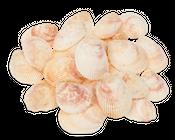Trachycardium elongatum 6-8 cm natur 450g | Muschel Ba Lua – Bild 1