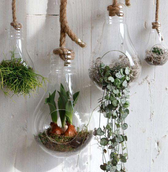 Pflanzenglas Glühbirne zum Hängen h. 21cm Ø11cm – Bild 5