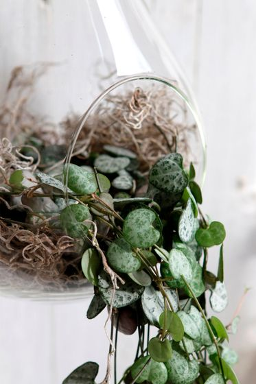 Pflanzenglas Glühbirne zum Hängen h. 21cm Ø11cm – Bild 6