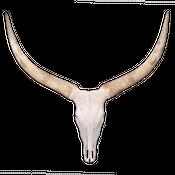 Watussi Rinder Schädel aus Afrika XXL Direktauswahl – Bild 2