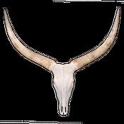 Watussi Rinder Schädel aus Afrika XXL Direktauswahl – Bild 1