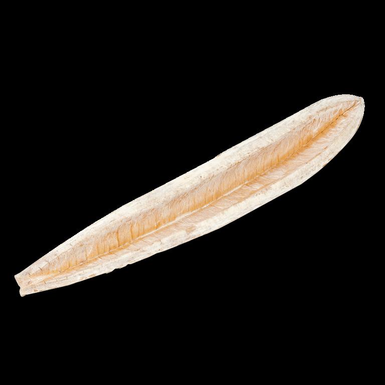 Sete Sangria weiß ca. 15-20cm| Cybister antisyphilitica Mart