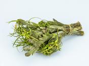 Mountain velvet grün im Bund mit 5 Stück | Bulbostylis paradoxa – Bild 2