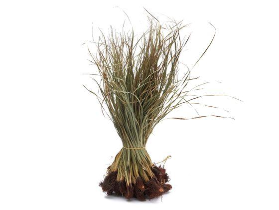 Tiririca gerade 500g | Cyperus rotundus – Bild 1