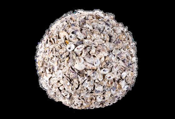 Muschelkugel Talaba Auster Ø 50cm – Bild 1