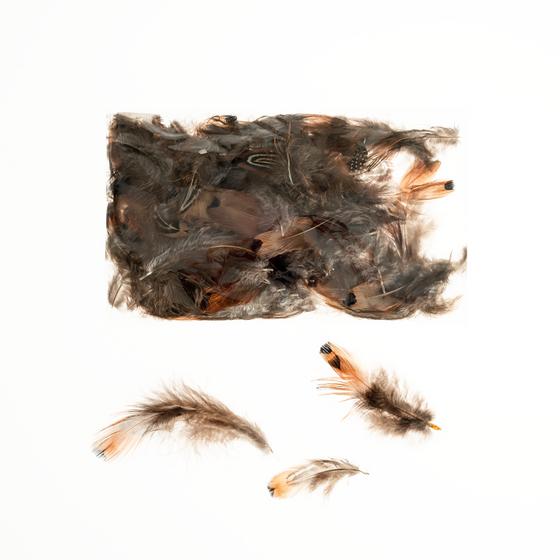 Fasanfedern natur im Beutel mit 5g | Fasan Feder – Bild
