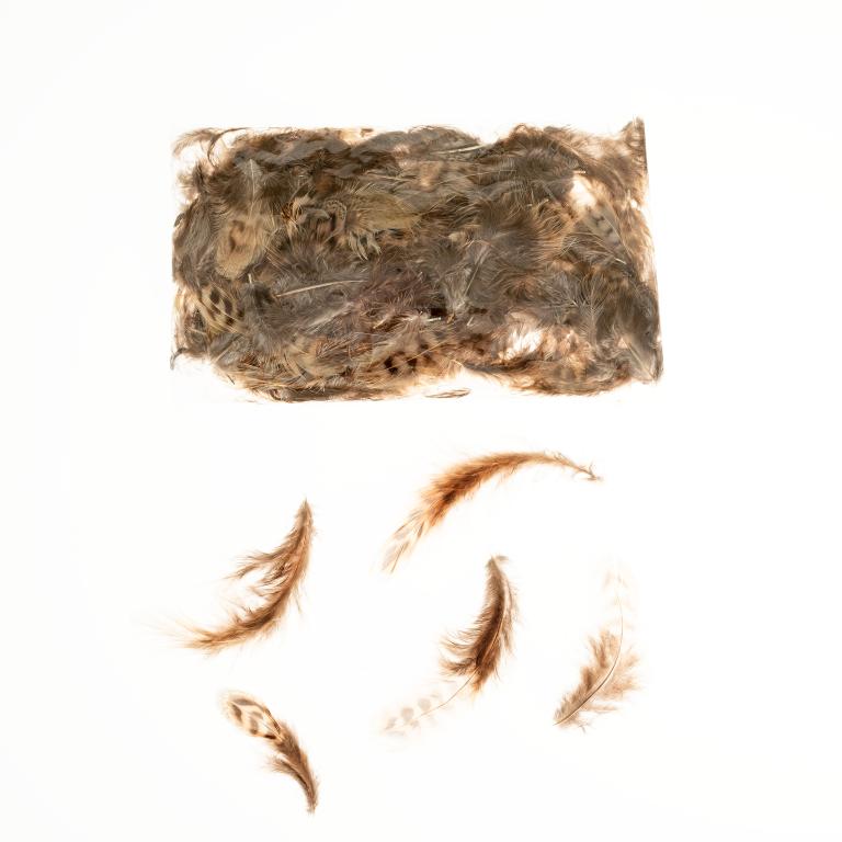 Feldhuhnfedern natur im Beutel mit 5g | Feldhuhn Federn | Dekofedern