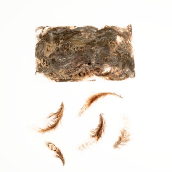 Feldhuhnfedern natur im Beutel mit 5g | Feldhuhn Federn | Dekofedern – Bild