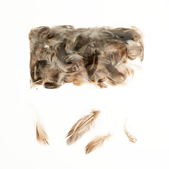 Hühnerfedern natur im Beutel mit 5g | Hühner Federn | Dekofedern – Bild